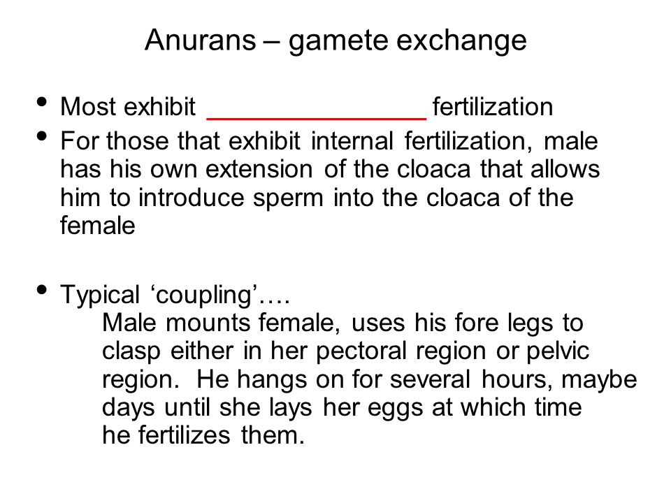 Anurans – gamete exchange Most exhibit _______________ fertilization For those that exhibit internal fertilization, male has his own extension of the cloaca that allows him to introduce sperm into the cloaca of the female Typical 'coupling'….