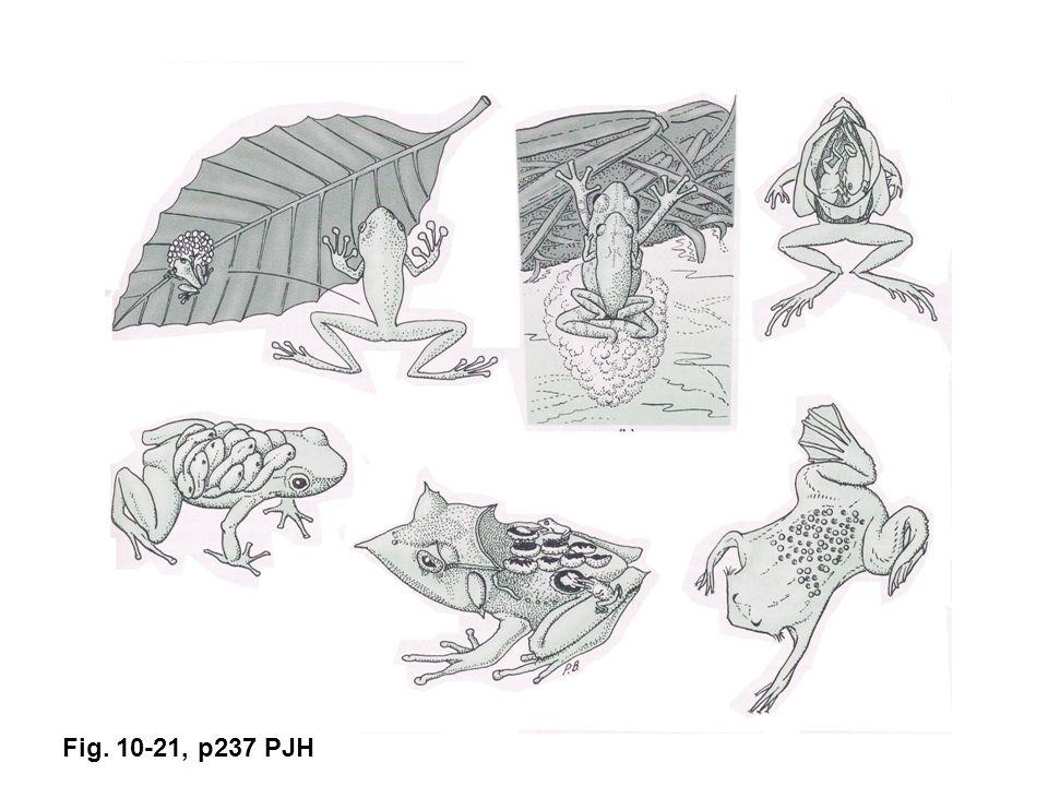 Fig. 10-21, p237 PJH