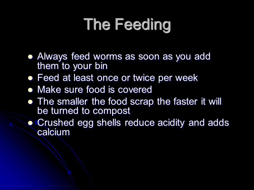 The Feeding Always feed worms as soon as you add them to your bin Always feed worms as soon as you add them to your bin Feed at least once or twice pe