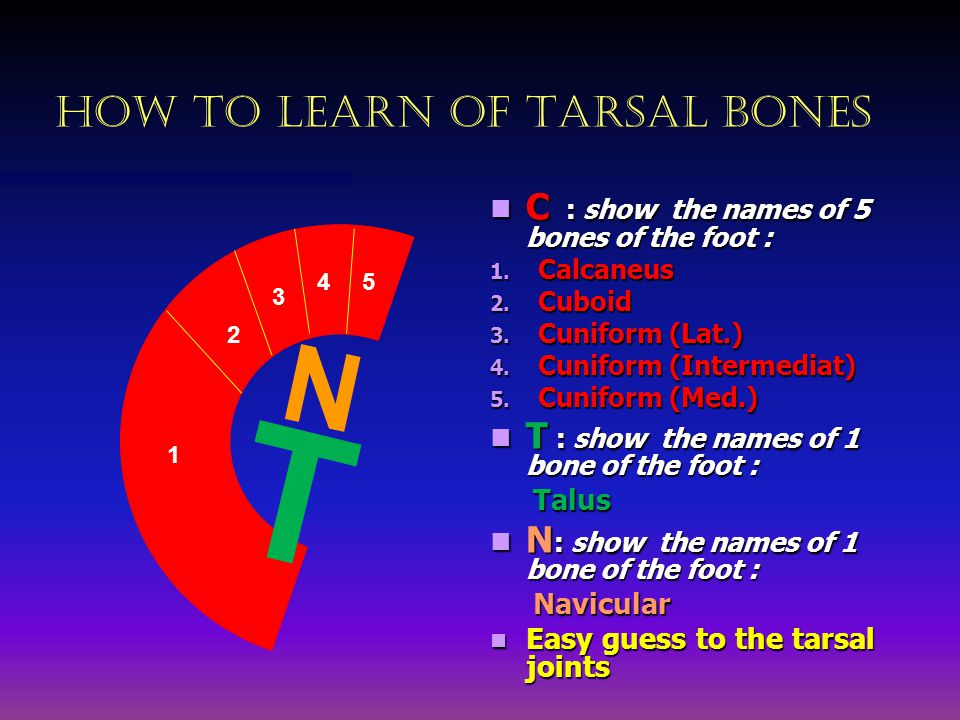 HOW TO LEARN OF TARSAL BONES N T 1 54 3 2 C : show the names of 5 bones of the foot : 1.