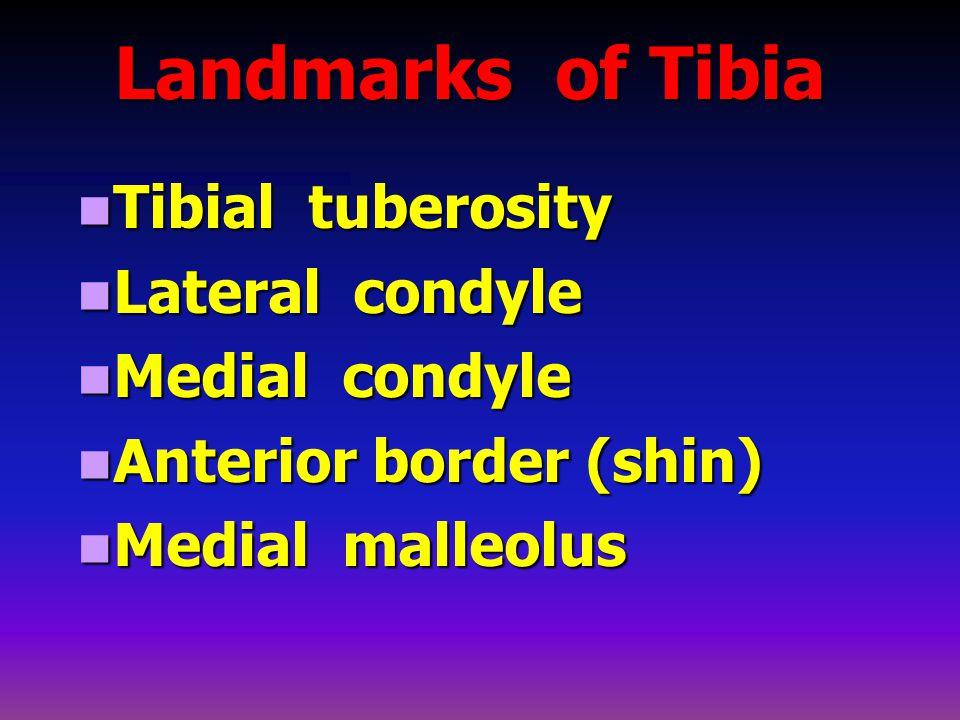 Landmarks of Tibia Tibial tuberosity Tibial tuberosity Lateral condyle Lateral condyle Medial condyle Medial condyle Anterior border (shin) Anterior border (shin) Medial malleolus Medial malleolus