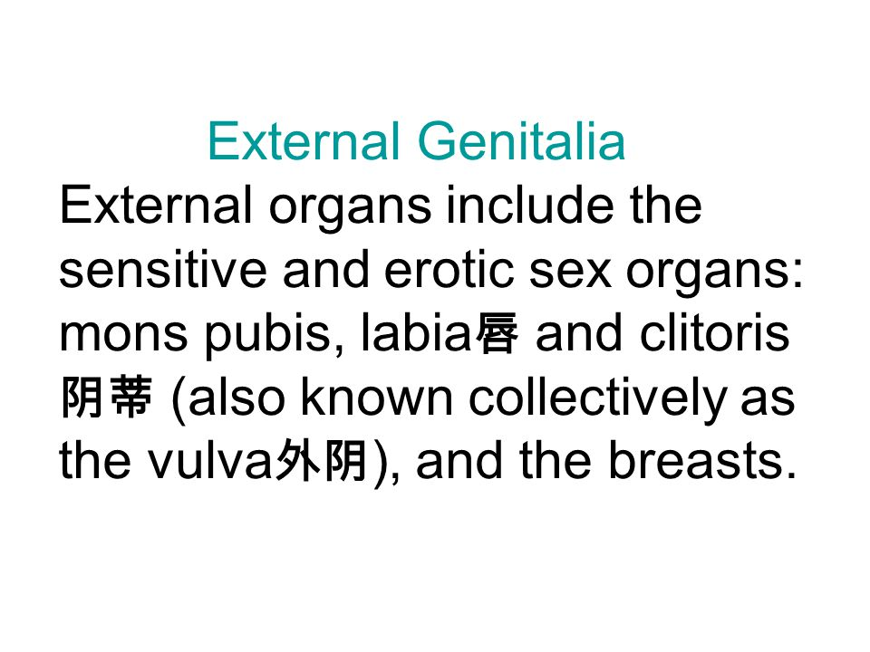 External Genitalia External organs include the sensitive and erotic sex organs: mons pubis, labia 唇 and clitoris 阴蒂 (also known collectively as the vulva 外阴 ), and the breasts.