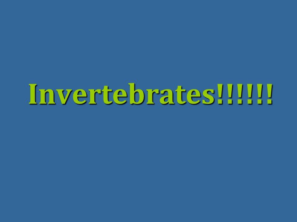 Invertebrates!!!!!!