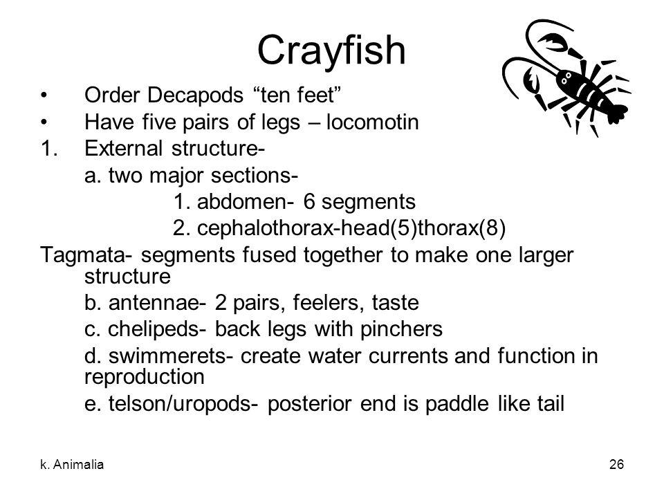 "k. Animalia26 Crayfish Order Decapods ""ten feet"" Have five pairs of legs – locomotin 1.External structure- a. two major sections- 1. abdomen- 6 segmen"