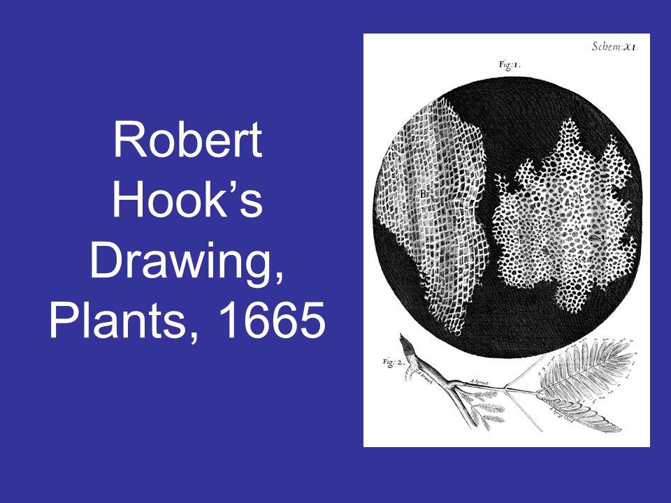 Robert Hook's Drawing, Plants, 1665