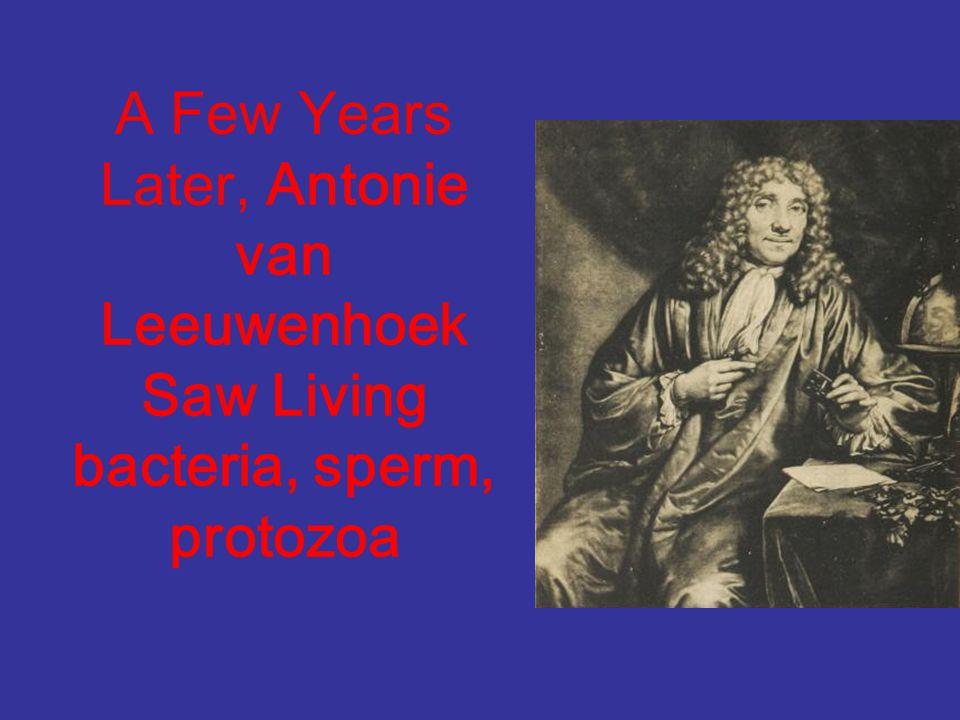 A Few Years Later, Antonie van Leeuwenhoek Saw Living bacteria, sperm, protozoa