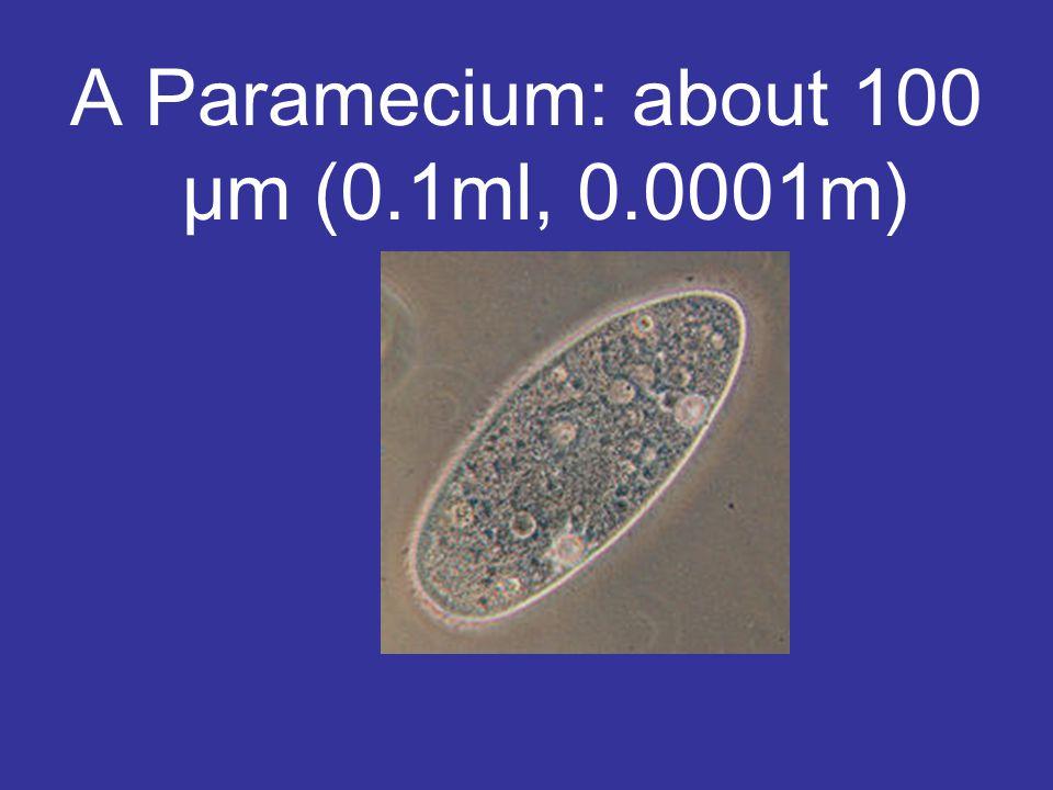 A Paramecium: about 100 μm (0.1ml, 0.0001m)
