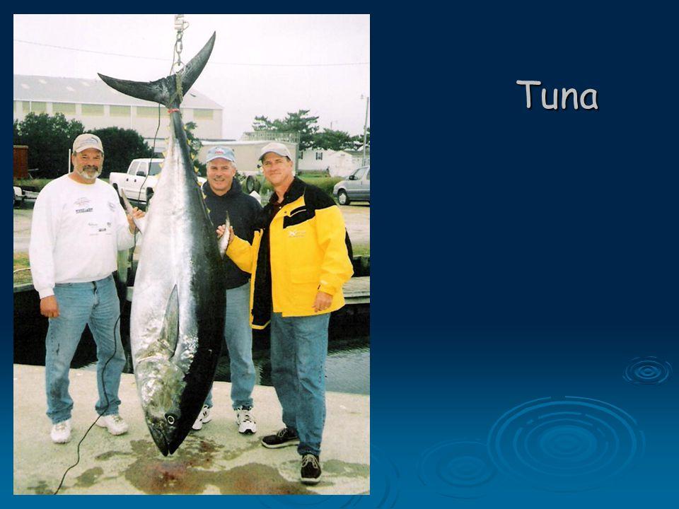Preparing fresh fish  Remove scales, scrape from tail to head.