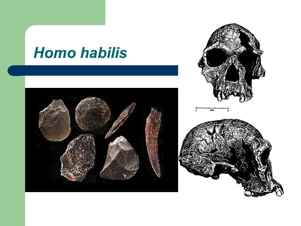 Pleistocene Homo I.Terminology II. The Pleistocene (1.8 m.y.a.