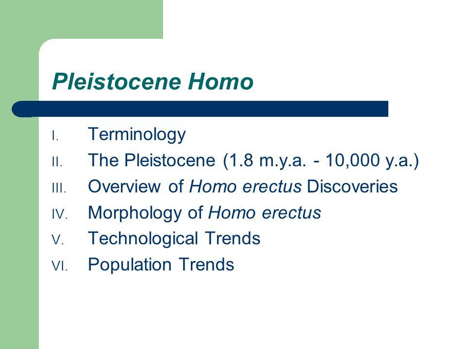 Pleistocene Homo I. Terminology II. The Pleistocene (1.8 m.y.a. - 10,000 y.a.) III. Overview of Homo erectus Discoveries IV. Morphology of Homo erectu