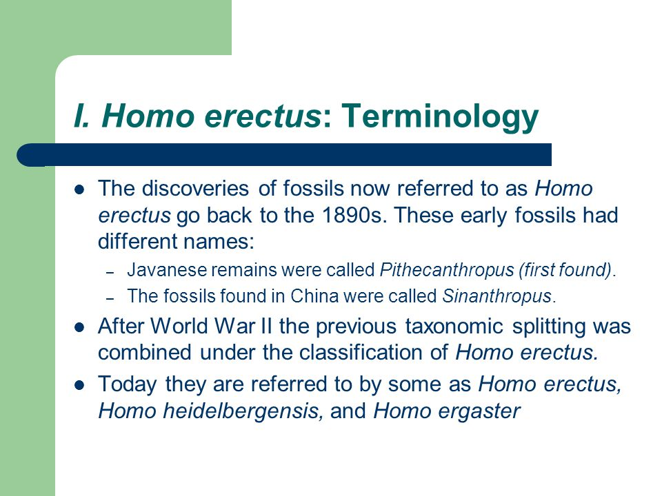 I. Homo erectus: Terminology The discoveries of fossils now referred to as Homo erectus go back to the 1890s. These early fossils had different names: