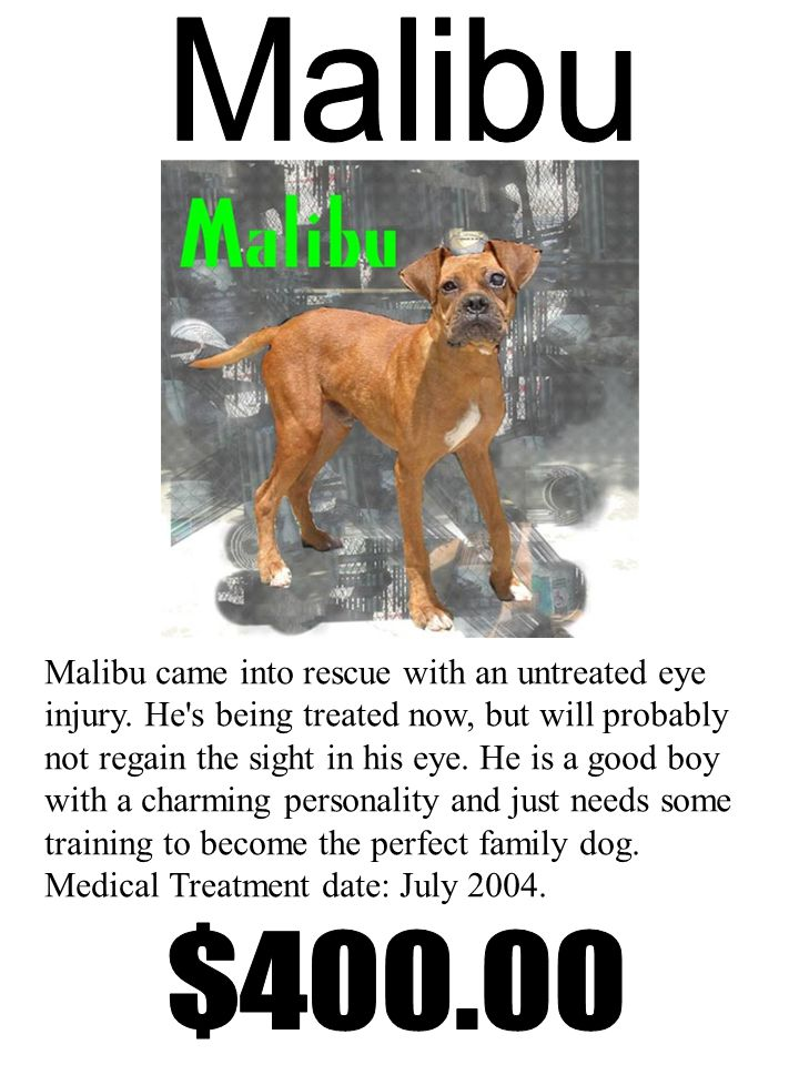 Malibu came into rescue with an untreated eye injury.
