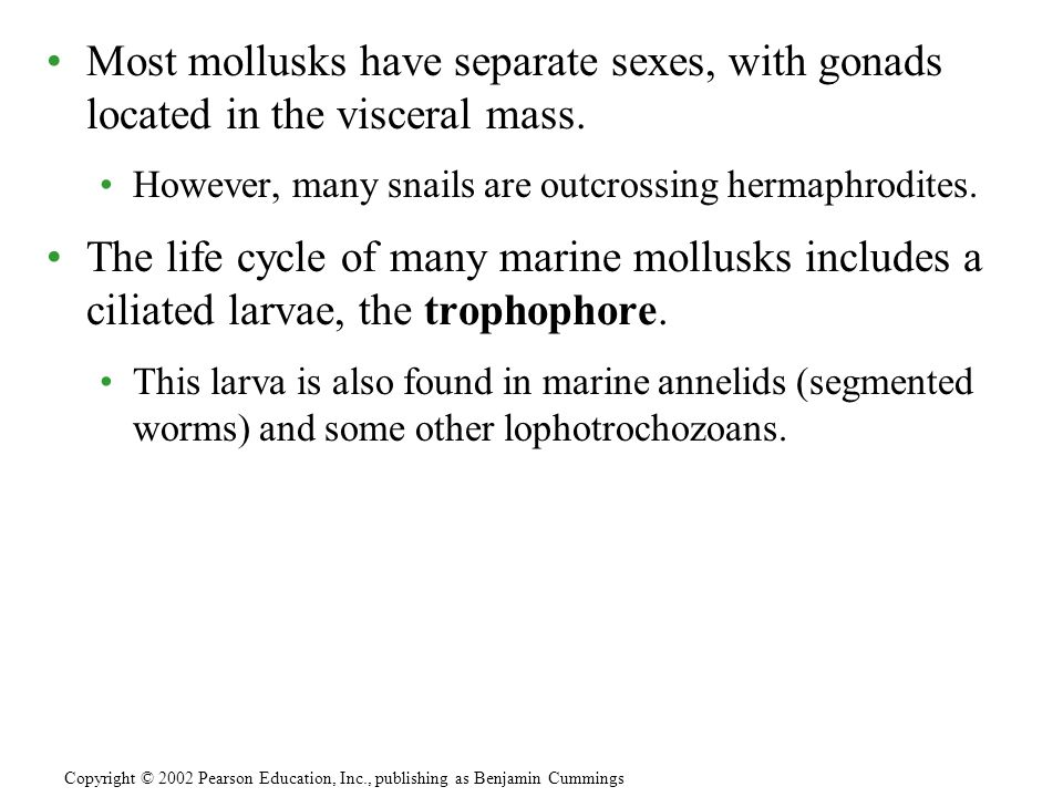 Most mollusks have separate sexes, with gonads located in the visceral mass.