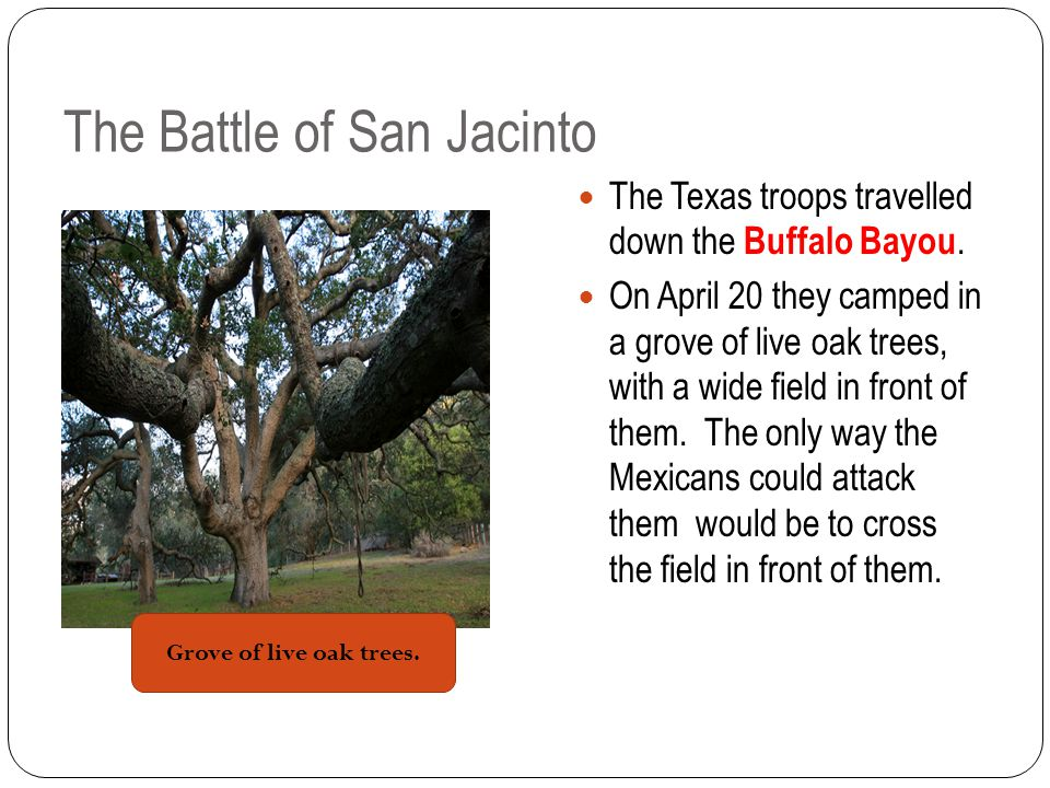 The Battle of San Jacinto The Texas troops travelled down the Buffalo Bayou.