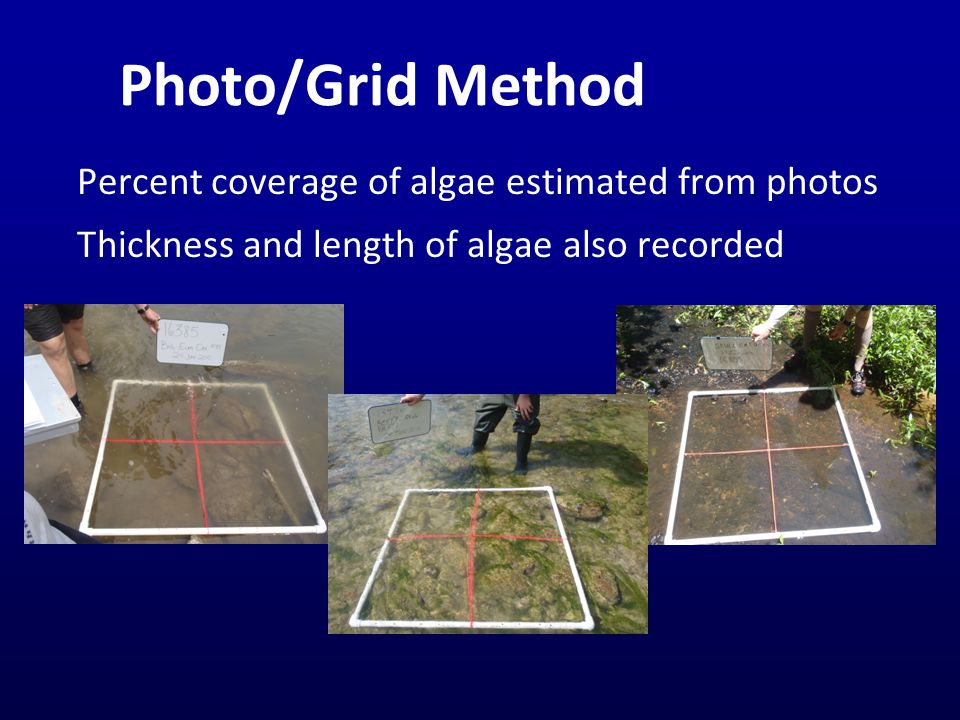 Photo/Grid Method Percent coverage of algae estimated from photos Thickness and length of algae also recorded