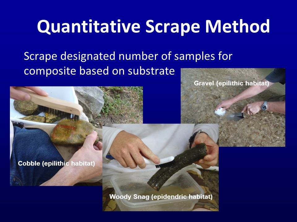 Quantitative Scrape Method Scrape designated number of samples for composite based on substrate Woody Snag (epidendric habitat) Gravel (epilithic habitat) Cobble (epilithic habitat)