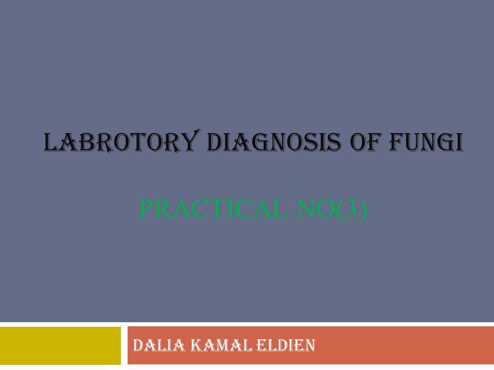LABROTORY DIAGNOSIS OF FUNGI PRACTICAL NO(3) DALIA KAMAL ELDIEN