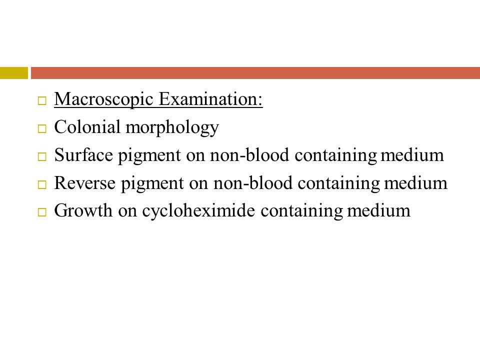  Macroscopic Examination:  Colonial morphology  Surface pigment on non-blood containing medium  Reverse pigment on non-blood containing medium  Growth on cycloheximide containing medium