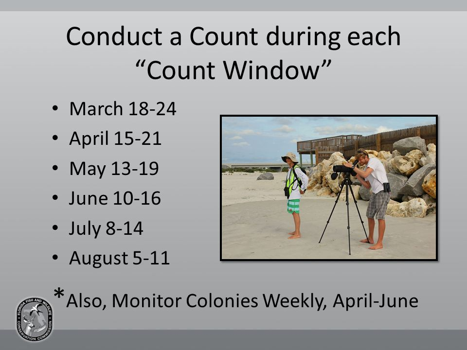 Conduct a Count during each Count Window March 18-24 April 15-21 May 13-19 June 10-16 July 8-14 August 5-11 * Also, Monitor Colonies Weekly, April-June