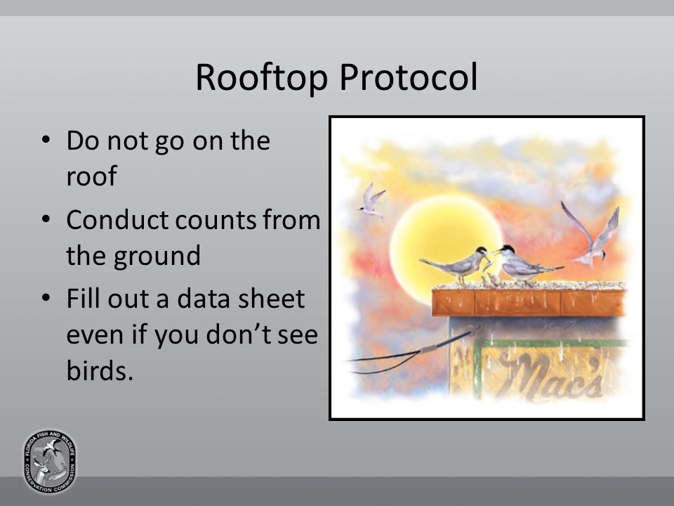 Rooftop Protocol Do not go on the roof Conduct counts from the ground Fill out a data sheet even if you don't see birds.