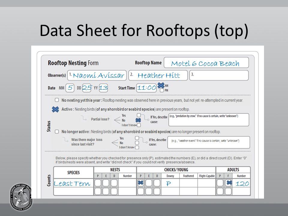 Data Sheet for Rooftops (top) Motel 6 Cocoa Beach Naomi AvissarHeather Hitt 5251311 00 Least Tern120P