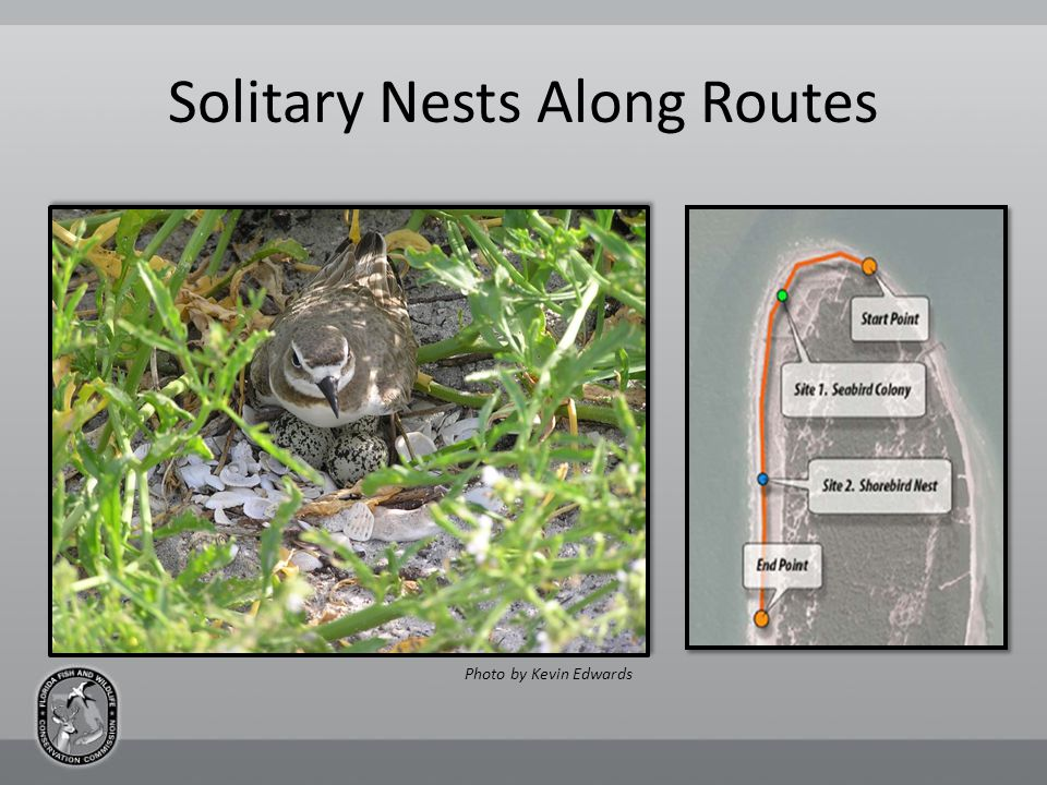 Solitary Nests Along Routes Photo by Kevin Edwards