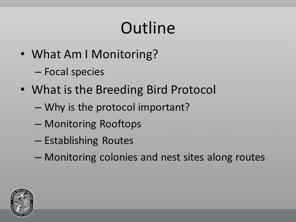 What Am I Monitoring? Solitary Nesting Shorebirds Colonial Nesting Seabirds