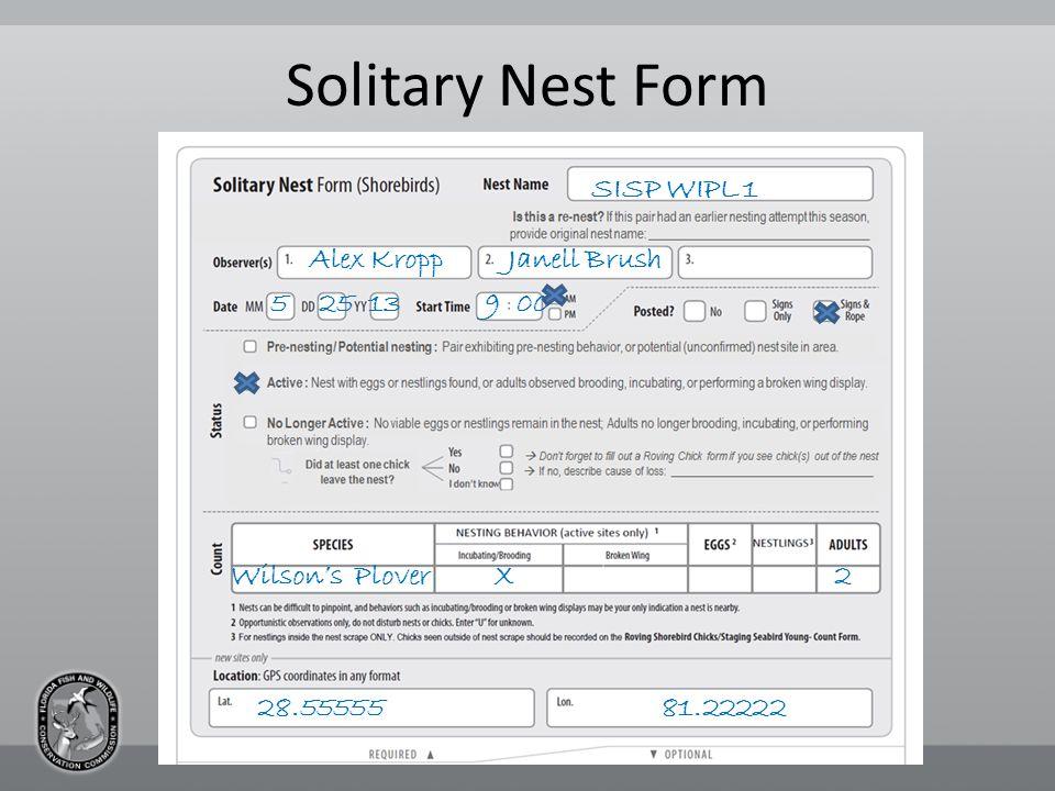 Solitary Nest Form SISP WIPL 1 Alex Kropp Janell Brush 5 25 13 9 00 Wilson's Plover X 2 81.2222228.55555