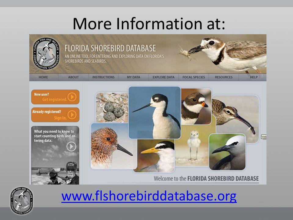 More Information at: www.flshorebirddatabase.org