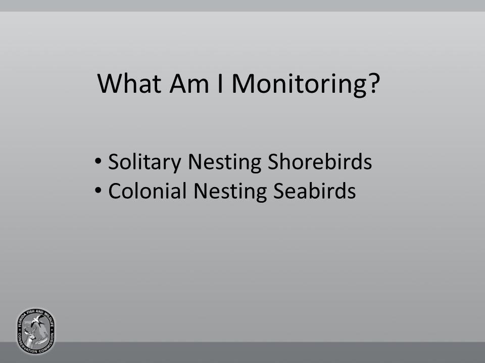 What Am I Monitoring Solitary Nesting Shorebirds Colonial Nesting Seabirds