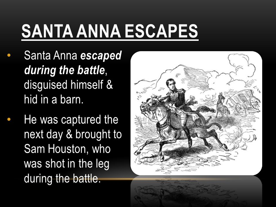 SANTA ANNA ESCAPES Santa Anna escaped during the battle, disguised himself & hid in a barn. He was captured the next day & brought to Sam Houston, who