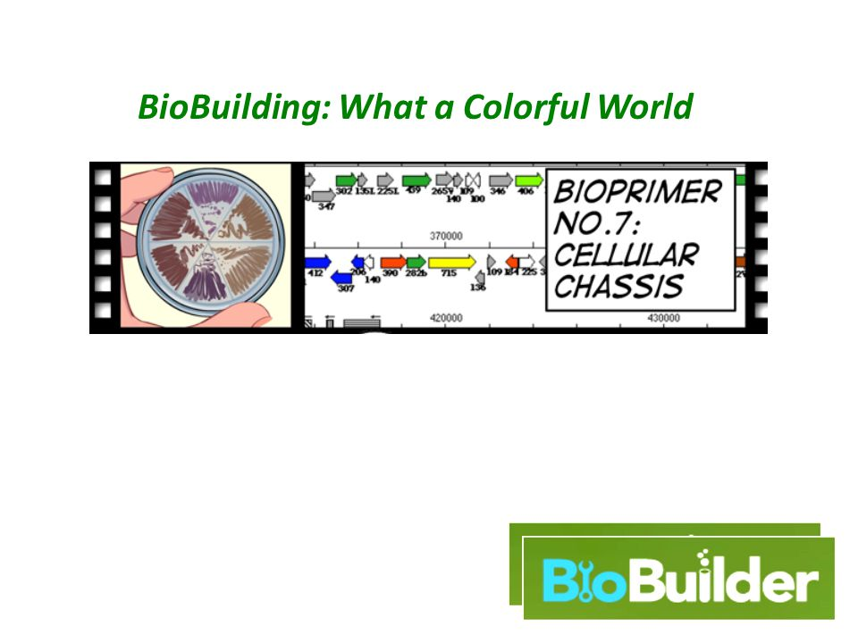 BioBuilding: What a Colorful World