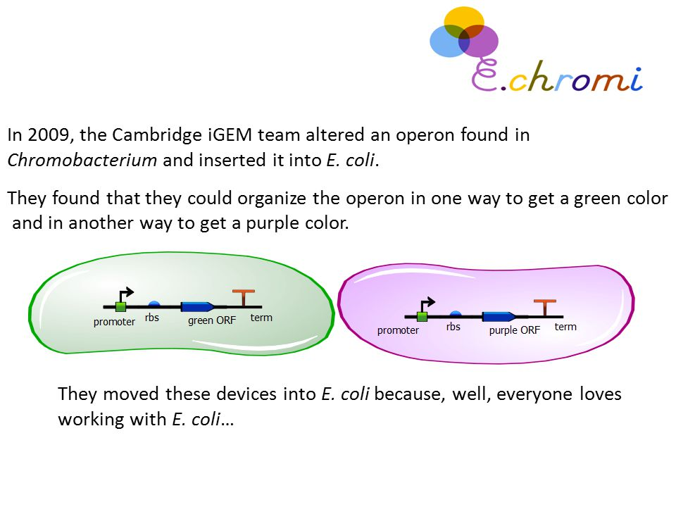 In 2009, the Cambridge iGEM team altered an operon found in Chromobacterium and inserted it into E. coli. They found that they could organize the oper