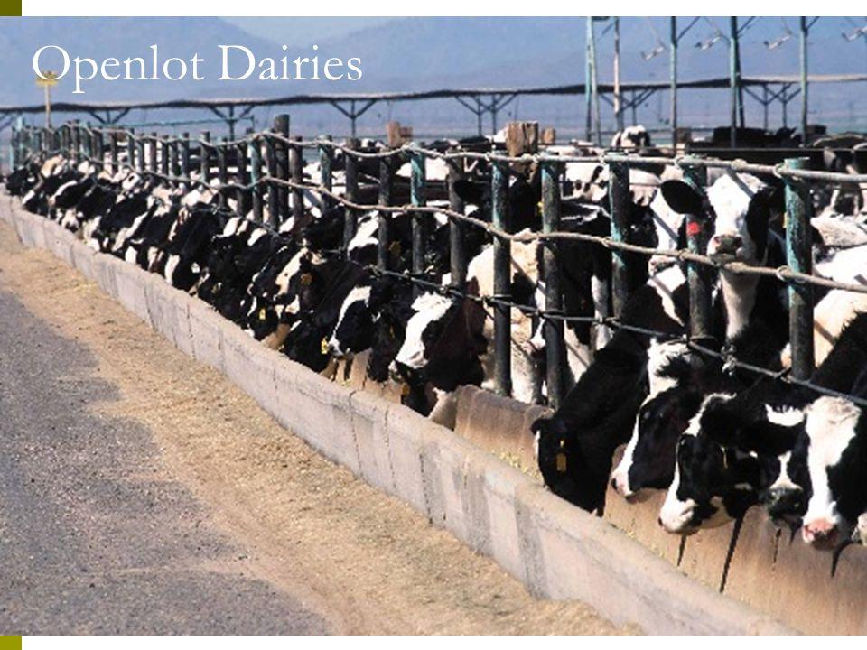 Openlot Dairies