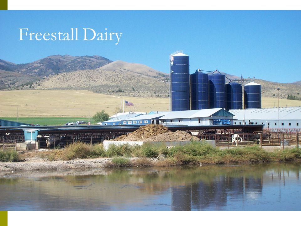 Freestall Dairy