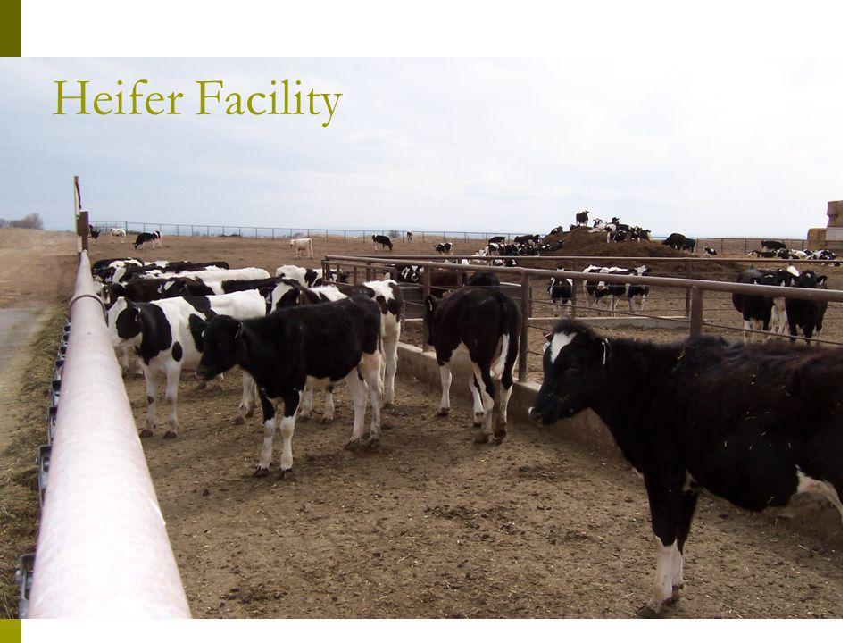 Heifer Facility