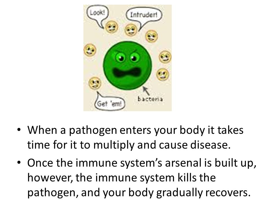 When a pathogen enters your body it takes time for it to multiply and cause disease. Once the immune system's arsenal is built up, however, the immune
