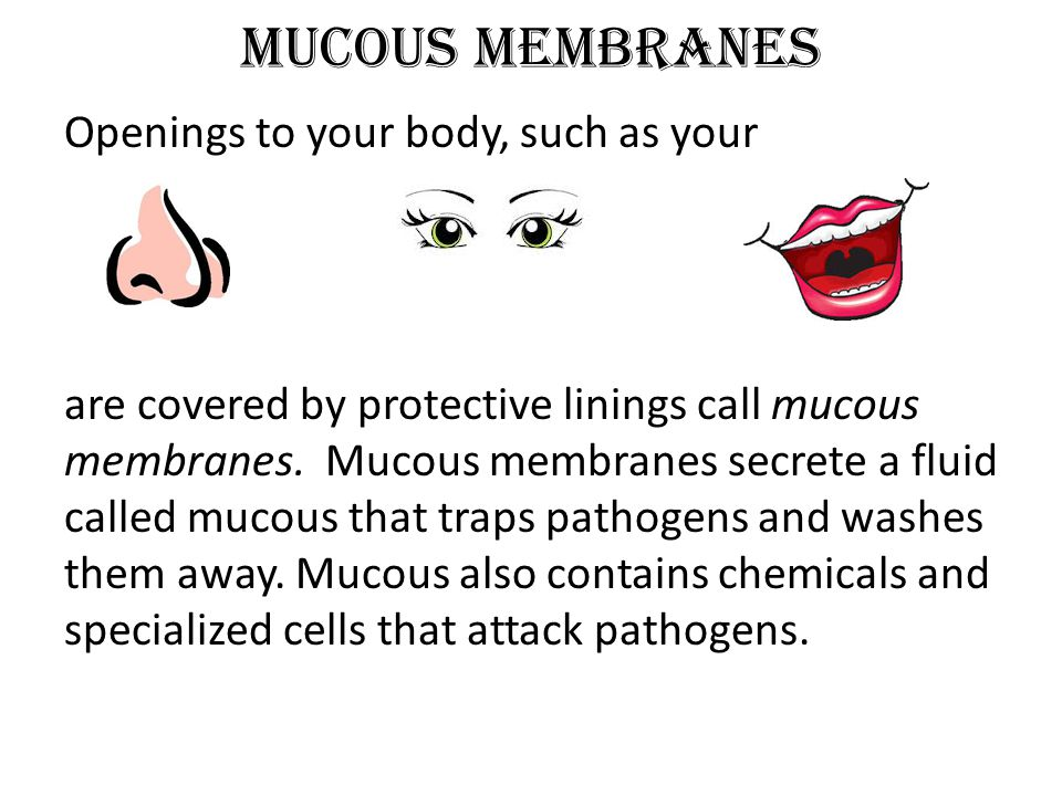Mucous Membranes Openings to your body, such as your are covered by protective linings call mucous membranes. Mucous membranes secrete a fluid called