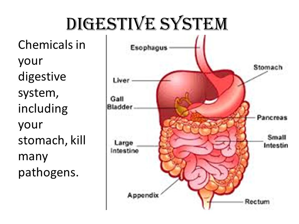 Digestive System Chemicals in your digestive system, including your stomach, kill many pathogens.
