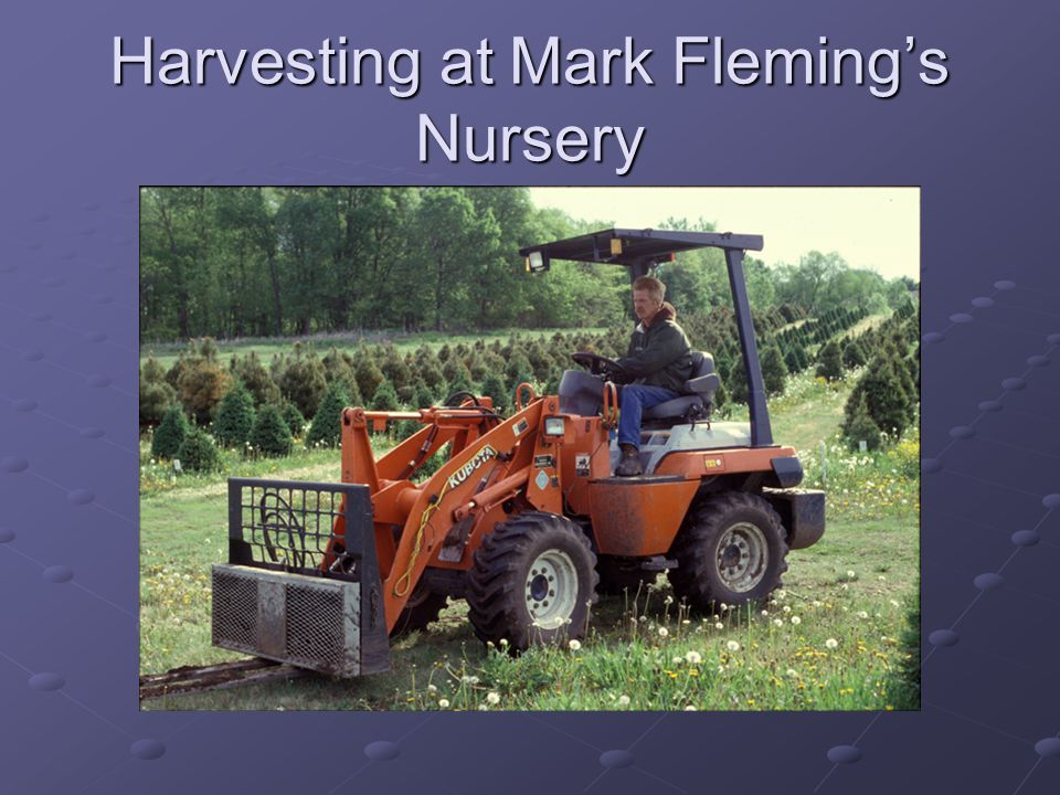 Harvesting at Mark Fleming's Nursery