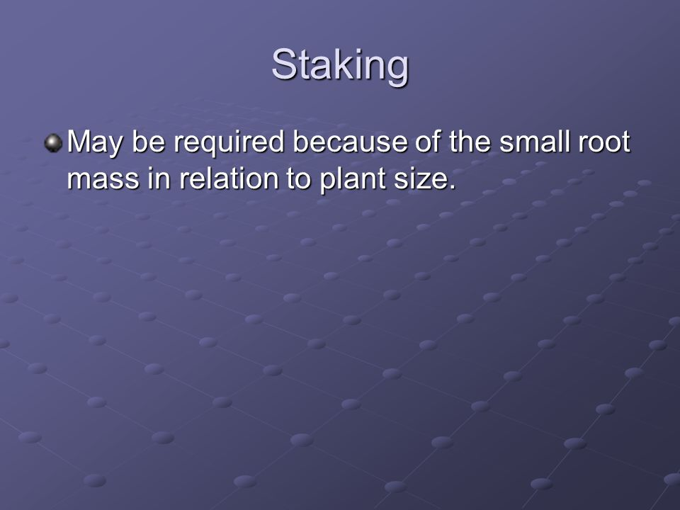 Staking May be required because of the small root mass in relation to plant size.