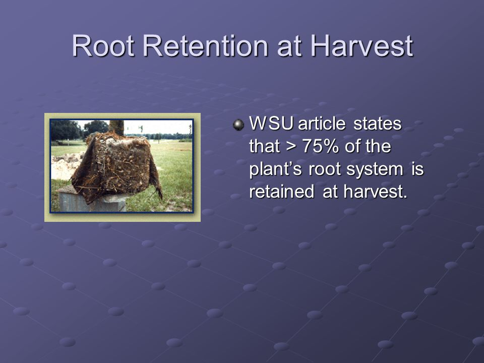Root Retention at Harvest WSU article states that > 75% of the plant's root system is retained at harvest.