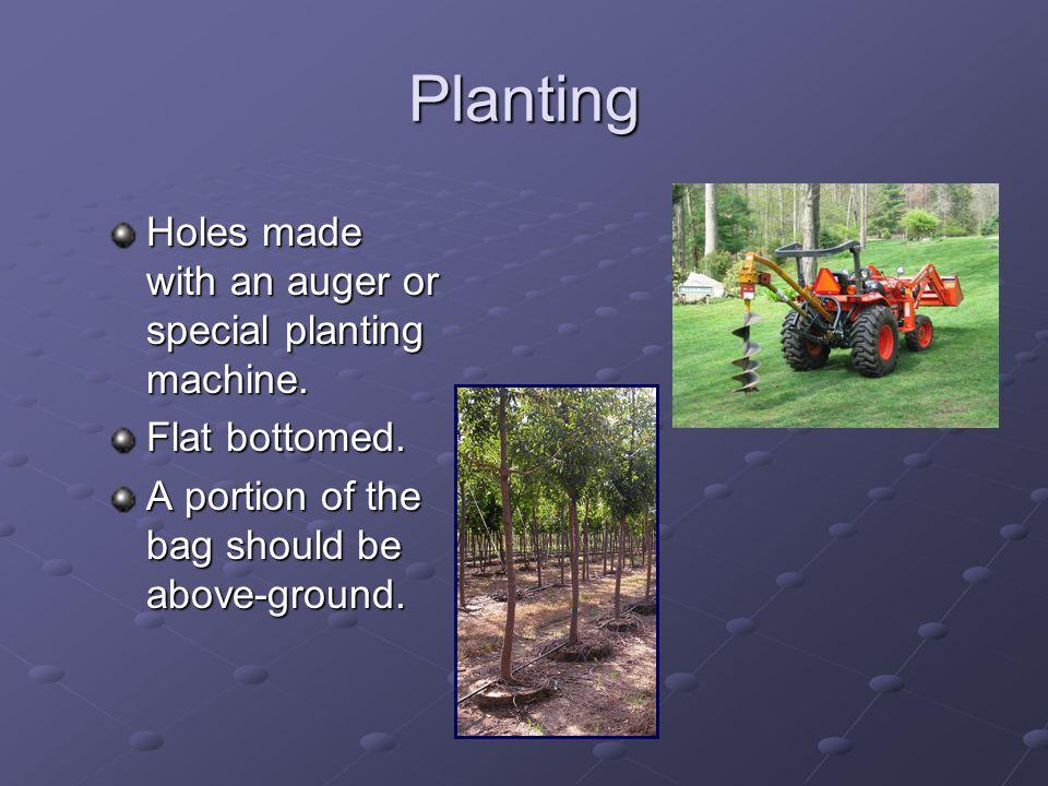 Planting at Mark Fleming's Nursery
