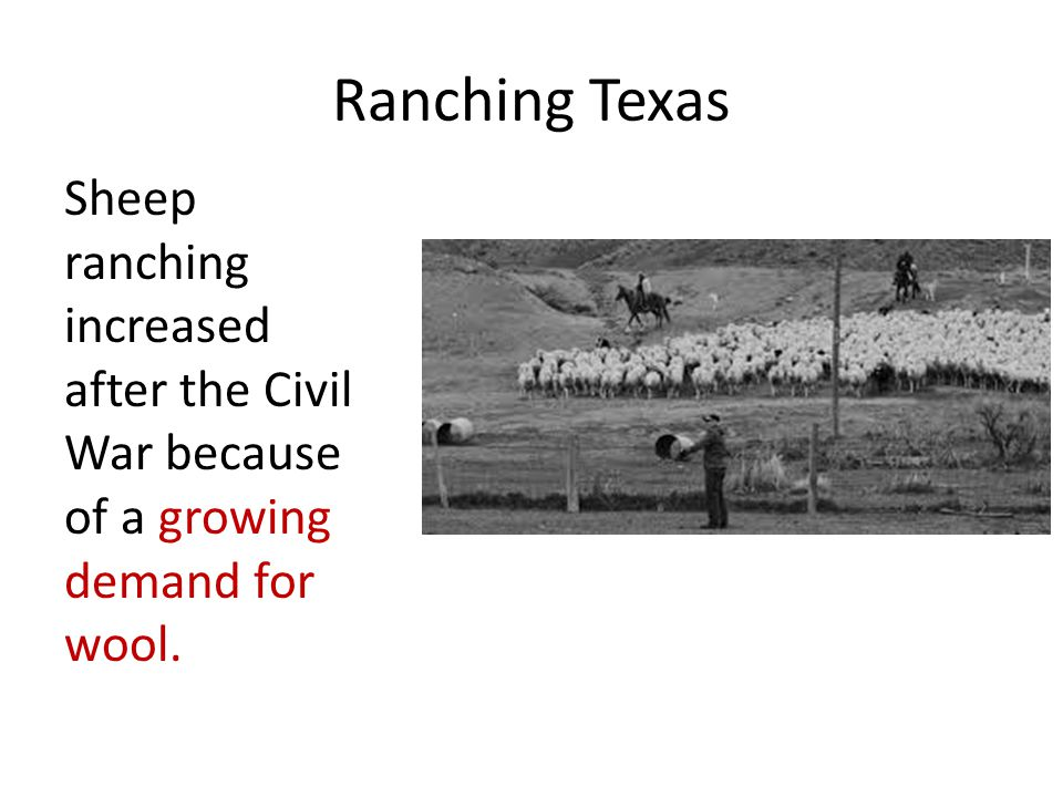 Ranching Texas Sheep ranching increased after the Civil War because of a growing demand for wool.