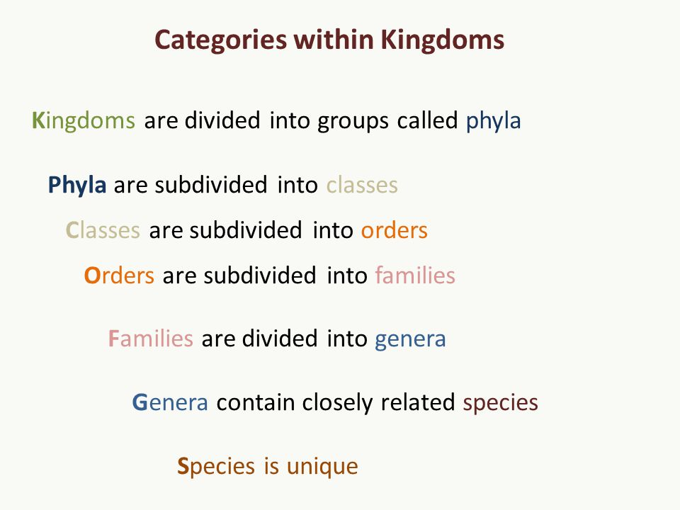 Kingdoms are divided into groups called phyla Phyla are subdivided into classes Classes are subdivided into orders Orders are subdivided into families Families are divided into genera Genera contain closely related species Species is unique Categories within Kingdoms
