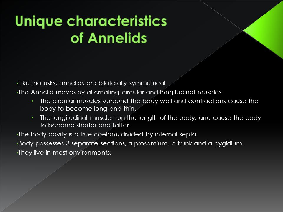 Like mollusks, annelids are bilaterally symmetrical. The Annelid moves by alternating circular and longitudinal muscles. The circular muscles surround
