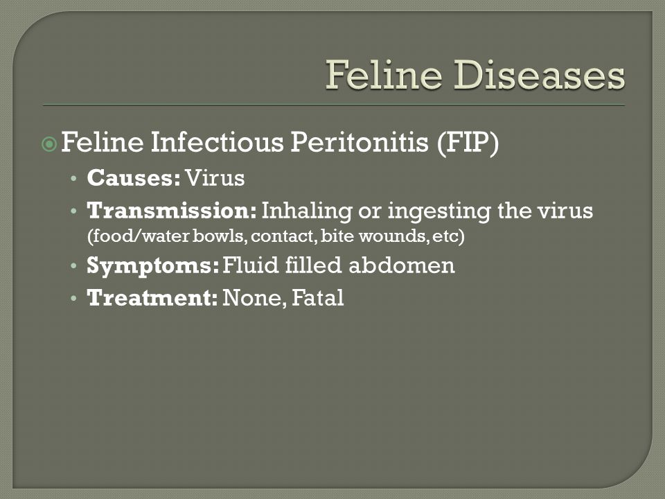  Feline Infectious Peritonitis (FIP) Causes: Virus Transmission: Inhaling or ingesting the virus (food/water bowls, contact, bite wounds, etc) Symptoms: Fluid filled abdomen Treatment: None, Fatal