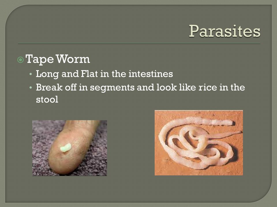  Tape Worm Long and Flat in the intestines Break off in segments and look like rice in the stool
