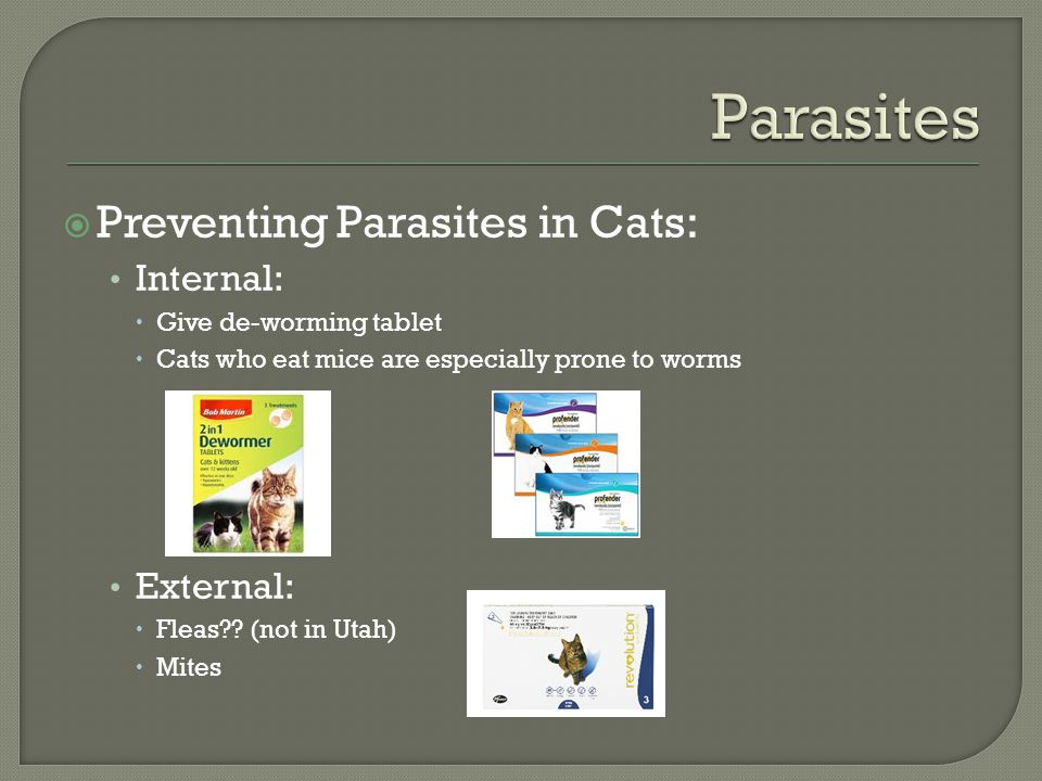  Preventing Parasites in Cats: Internal:  Give de-worming tablet  Cats who eat mice are especially prone to worms External:  Fleas?.