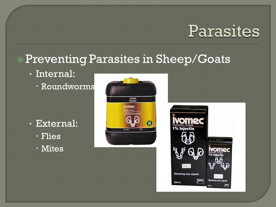  Preventing Parasites in Sheep/Goats Internal:  Roundworms External:  Flies  Mites